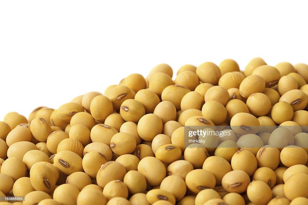 Soybean : Stock Photo