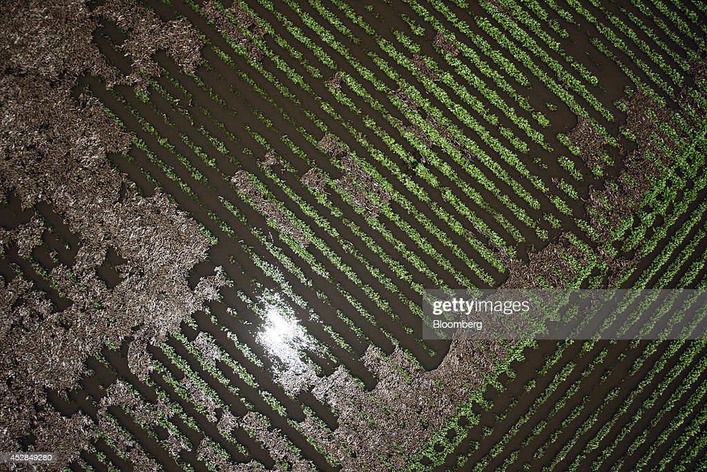 Soybean plants stand in a flooded field near Wyanet, Illinois, U.S., on Tuesday, July 1, 2014. A powerful wind storm, known as a derecho, swept from the Midwest to the western Great Lakes yesterday, bringing devastating wind gusts, reported tornadoes and heavy rain into Illinois, Iowa, and Nebraska according to Weather.com. Despite the weather, soybeans fell to the lowest since December 2011 as the outlook for record seedings boosted speculation that supplies will be ample in the U.S. Photographer: Daniel Acker/Bloomberg via Getty Images