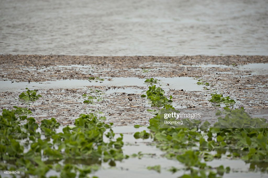 Soybean plants stand submerged in water in a flooded field near Wyanet, Illinois, U.S., on Tuesday, July 1, 2014. A powerful wind storm, known as a derecho, swept from the Midwest to the western Great Lakes yesterday, bringing devastating wind gusts, reported tornadoes and heavy rain into Illinois, Iowa, and Nebraska according to Weather.com. Despite the weather, soybeans fell to the lowest since December 2011 as the outlook for record seedings boosted speculation that supplies will be ample in the U.S. Photographer: Daniel Acker/Bloomberg via Getty Images