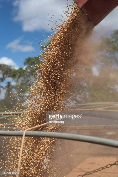 Soybeans are loaded into a truck after being harvested at the Santa Cruz farm near Atibaia Brazil on Wednesday March 29 2017 Brazil is the world's...