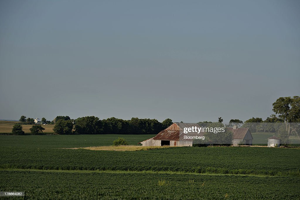 Soybeans grow in a field outside of Sheffield, Illinois, U.S., on Wednesday, Aug. 28, 2013. Wheat futures fell for a third straight day on signs of slack demand for inventories from the U.S., the worlds largest exporter, while soybeans dropped and corn gained. Photographer: Daniel Acker/Bloomberg via Getty Images