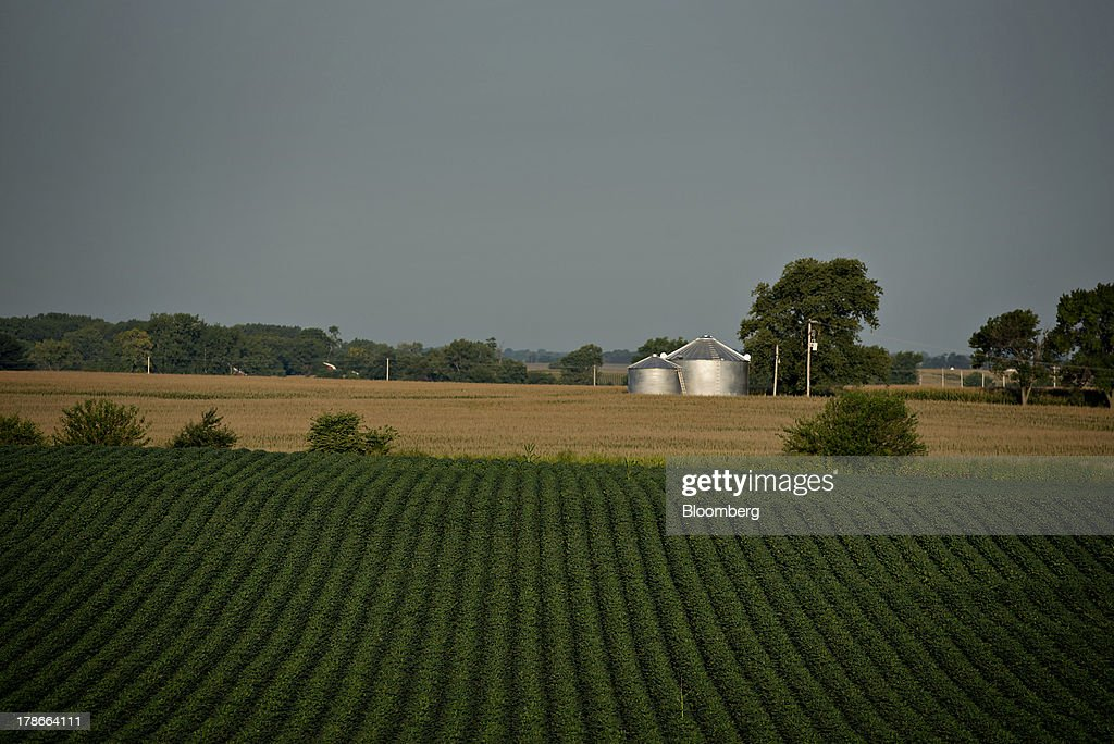 Soybeans grow in a field outside of Wyanet, Illinois, U.S., on Wednesday, Aug. 28, 2013. Wheat futures fell for a third straight day on signs of slack demand for inventories from the U.S., the worlds largest exporter, while soybeans dropped and corn gained. Photographer: Daniel Acker/Bloomberg via Getty Images