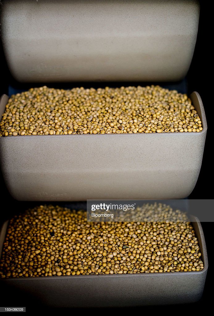 Soybeans sit in bins on a vertical conveyor at the Atherton Grain Co. Inc. elevator in Normandy, Illinois, U.S., on Wednesday, Oct. 3, 2012. Soybeans climbed for a third day as U.S. export sales jumped, boosted by purchases from China. Photographer: Daniel Acker/Bloomberg via Getty Images