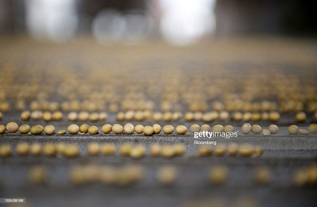 Soybeans sit on a grate at the Atherton Grain Co. Inc. elevator in Normandy, Illinois, U.S., on Wednesday, Oct. 3, 2012. Soybeans climbed for a third day as U.S. export sales jumped, boosted by purchases from China. Photographer: Daniel Acker/Bloomberg via Getty Images