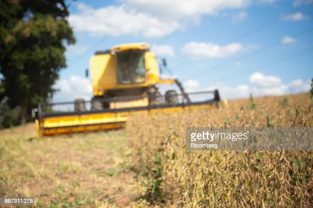Soybeans stand in a field as a combine machine harvests at the Santa Cruz farm near Atibaia Brazil on Wednesday March 29 2017 Brazil is world's...