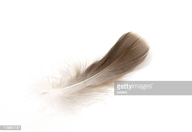 Spa feather