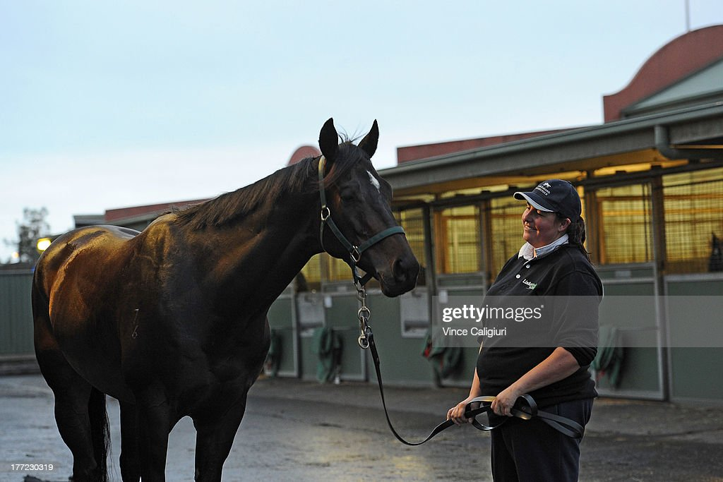 Spacecraft from the David Hayes stable after a Flemington trackwork session at Flemington Racecourse on August 23, 2013 in Melbourne, Australia.