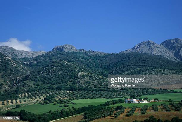 Spain Between Malaga And Grenada Olive Tree Plantation Farmhouse Fields Sierra Nevada Mts