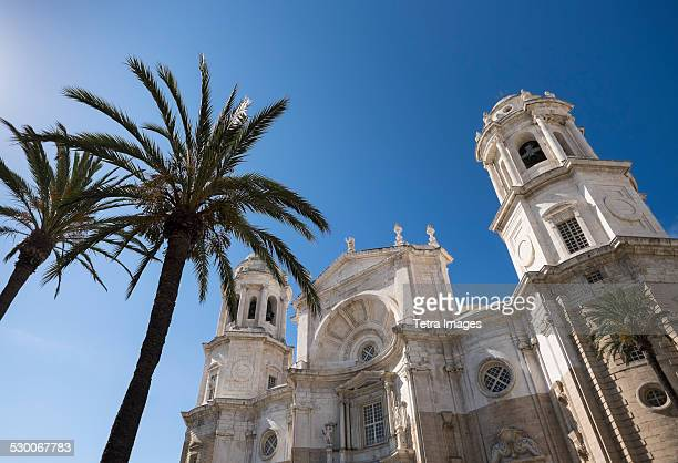 Spain, Cadiz, Palm trees in front of Cathedral