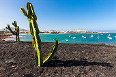 Spain, Canary Islands, Lanzarote, cactuses at Costa Teguise