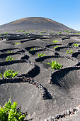 Spain, Canary Islands, Lanzarote, La Geria, view to wine-growing district at Volcanic landscape