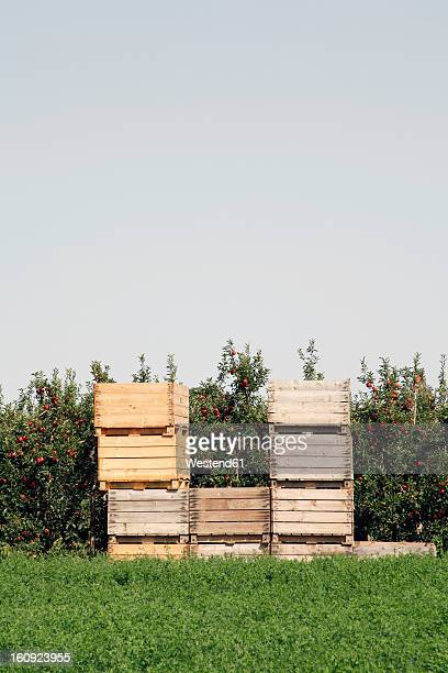 Spain, Catalonia, Apple plantation with wooden boxes