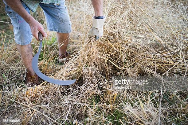 Spain, farmer cutting dry grass with scythe