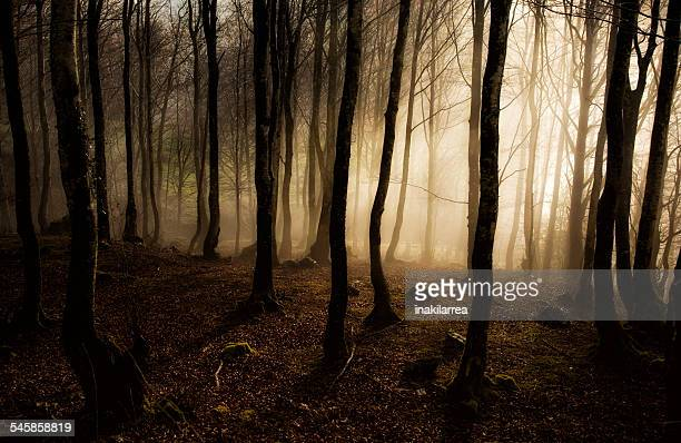 Spain, Fog at morning in forest of Navarra