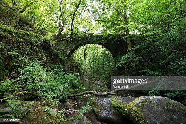 Spain, Galicia, Pontedeume, Old stone bridge in the forest, Natural Park Fragas del Eume