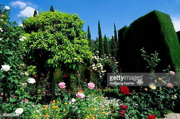 Spain Grenada Alhambra Generalife Lower Or New Gardens Roses