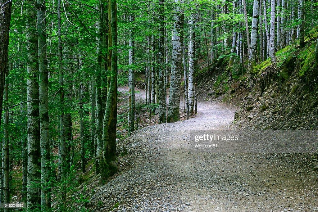 Spain, Ordesa National Park, forest path