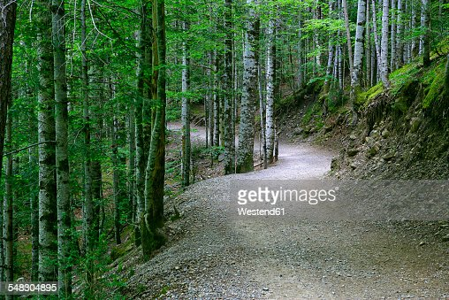 Spain, Ordesa National Park, forest path