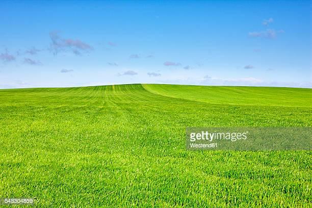 Spain, Province of Zamora, wheat field