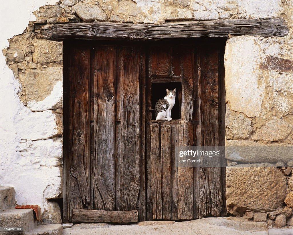 Spain,Moggaraz,Sierra de Gredos,cat sitting in window of wooden door : Stock Photo