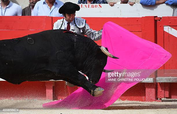 Spaniard Morante De La Puebla fights a Spanish Zalduendo bull on September 21 2014 during the second bullfight of the Feria des Vendanges in the...