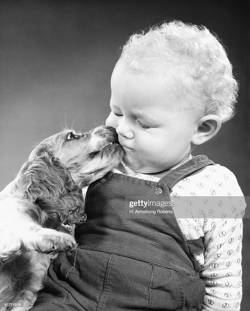 Spaniel nuzzling cheek of toddler. : Stock Photo
