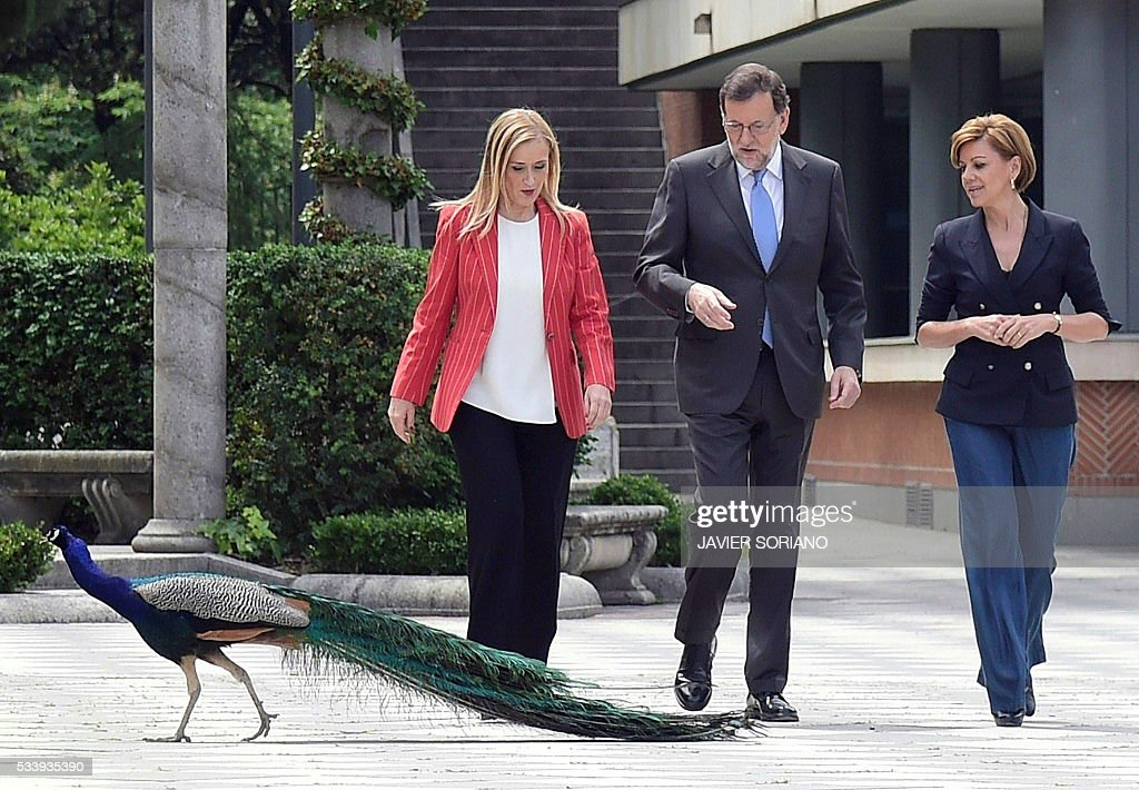 Spanish acting Prime Minister and Popular Party (PP) President Mariano Rajoy (C), General Secretary of the Popular Party Maria Dolores de Cospedal (R) and Community of Madrid President Cristina Cifuentes bump into a peacock as they arrive to present the Spanish Congress candidates for the June 26 upcoming general election in Madrid on May 24, 2016. / AFP / JAVIER