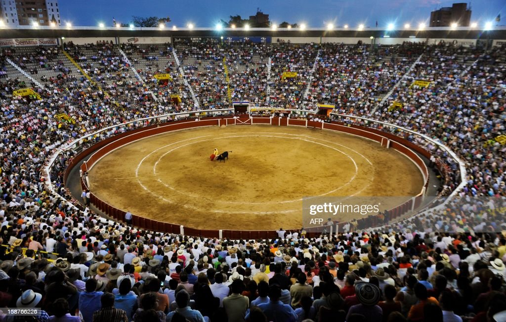 Spanish bullfighter Ivan Fandino performs a cape pass during a bullfight at the Canaveralejo bullring in Cali, department of Valle del Cauca, Colombia on December 27, 2012. AFP PHOTO/Luis ROBAYO