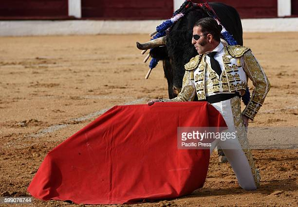TOROS ALMAZáN SORIA SPAIN Spanish bullfighter Juan Jóse Padilla 43 yearsold performs with a 'José Luis Pereda' ranch fighting bull during a bullfight...