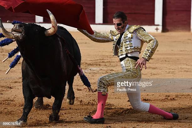 TOROS ALMAZáN SORIA SPAIN Spanish bullfighter Juan Jóse Padilla 43 yearsold performs with a 'José Luis Pereda' ranch fighting bull during a bullfight...