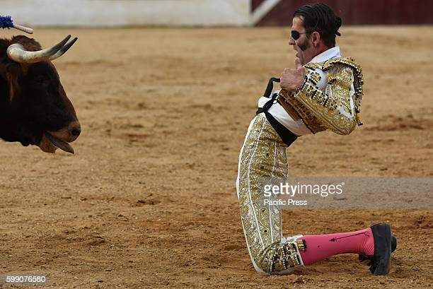 TOROS ALMAZáN SORIA SPAIN Spanish bullfighter Juan Jóse Padilla 43 yearsold performs with a 'La Dehesilla' ranch fighting bull during a bullfight at...