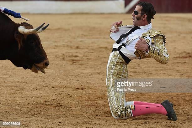 TOROS ALMAZáN SORIA SPAIN Spanish bullfighter Juan Jóse Padilla 43 yearsold performs with a 'La Dehesilla' ranch fighting bull during a bullfight at...