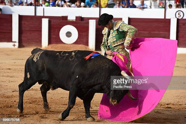 TOROS ALMAZáN SORIA SPAIN Spanish bullfighter Manuel Jesús Cid 42 yearsold performs with a 'José Luis Pereda' ranch fighting bull during a bullfight...