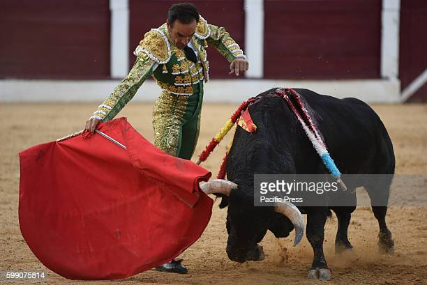 TOROS ALMAZáN SORIA SPAIN Spanish bullfighter Manuel Jesús Cid 42 yearsold performs with a 'José Luis Pereda' ranch fighting bull during a bullfight...