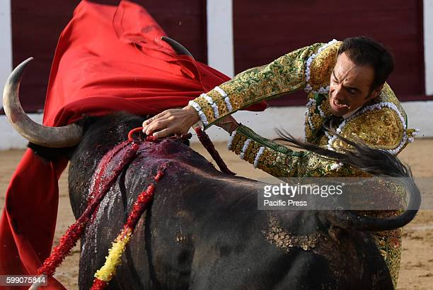 TOROS ALMAZáN SORIA SPAIN Spanish bullfighter Manuel Jesús Cid 42 yearsold uses his sword to kill a 'José Luis Pereda' ranch fighting bull during a...