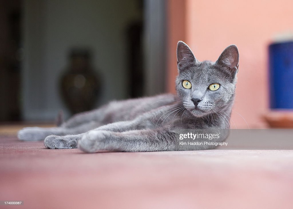 Spanish Cat Stock Photo | Getty Images