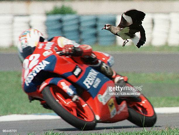 Spanish driver Pablo Nieto rides his cycle past a bird on the track during a practice run 23 October for the 24 October running of the Brazilian...