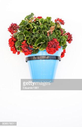 Spanish flowers : Stock Photo