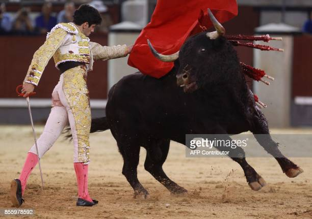 Spanish matador Alberto Lopez Simon performs a pass on a bull during a bullfight at Las Ventas bullring in Madrid on September 30 2017 / AFP PHOTO /...