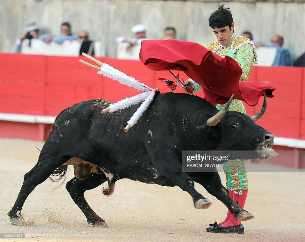 Spanish matador Alejandro Talavante performs a muleta on a Nunez del Cuvillo bull, on May 20, 2010, during the Nimes Feria Bullfighting Festival (Feria de la Pentecote). during the Nimes' Pentecost Feria, southern France.