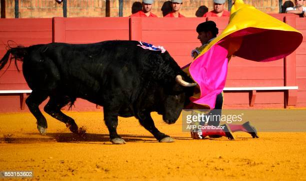 Spanish matador Alejandro Talavante performs a pass with capote during a bullfight at the Maestranza bullring in Sevilla on September 24 2017 / AFP...
