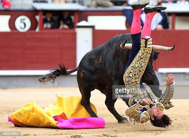 Spanish matador David Mora is gored by a bull during a bullfight of the San Isidro Feria at the Las Ventas bullring in Madrid on May 20 2014...
