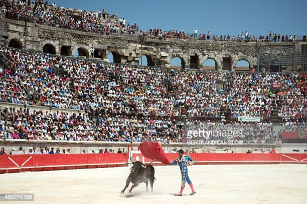 Spanish matador Jose Maria Manzanares performs a pass on a Juan Pedro Domecq fighting bull on June 8 during the Bullfighting Pentecost feria in Nimes...