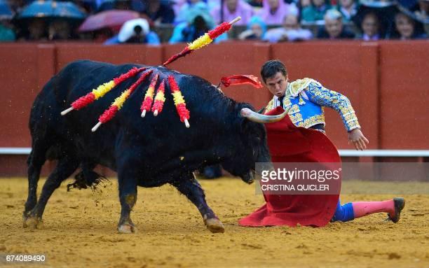 Spanish matador Julian Lopez 'El Juli' kneels to perform a pass with muleta on a bull during a bullfight at the Maestranza bullring in Sevilla on...