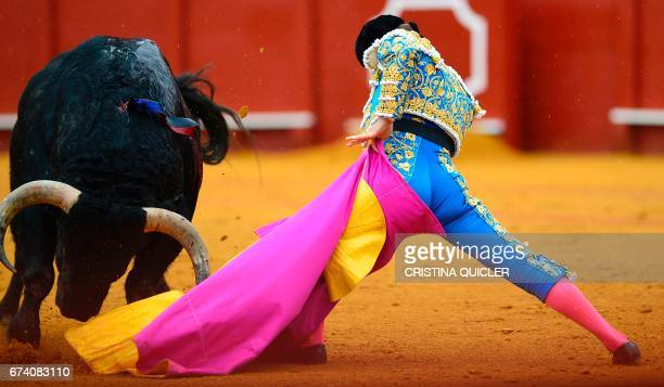 Spanish matador Julian Lopez 'El Juli' performs a pass with capote on a bull during a bullfight at the Maestranza bullring in Sevilla on April 27...