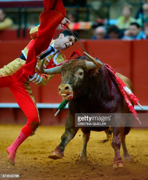 Spanish matador Lopez Simon kills the bull with the sword during a bullfight at the Maestranza bullring in Sevilla on April 28 2017 / AFP PHOTO /...