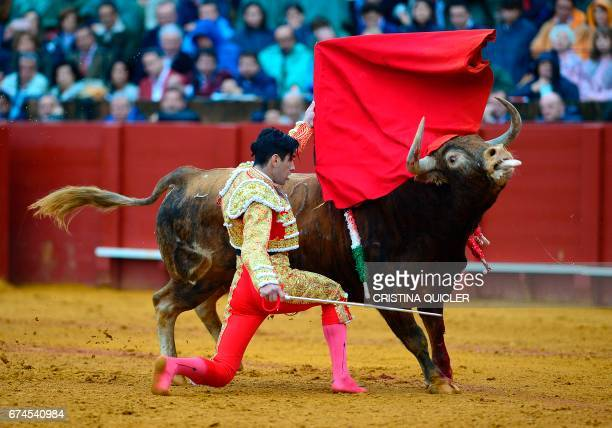 Spanish matador Lopez Simon kneels to perform a pass with muleta on a bull during a bullfight at the Maestranza bullring in Sevilla on April 28 2017...