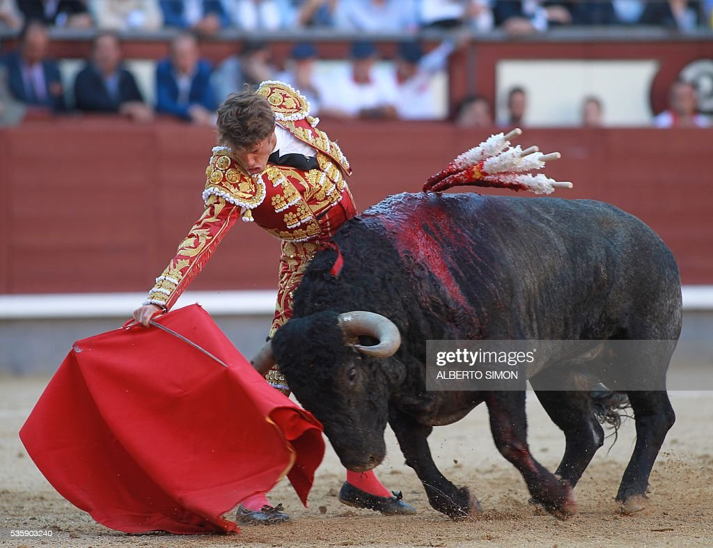Spanish matador Manuel Escribano performs a pass on a bull during the San Isidro bullfight festival at Las Ventas bullring in Madrid on May 30, 2016. / AFP / ALBERTO