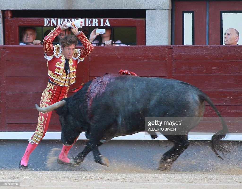 Spanish matador Manuel Escribano uses harpoon-pointed colorful sticks or 'banderillas' to maime a bull during the San Isidro bullfight festival at Las Ventas bullring in Madrid on May 30, 2016. / AFP / ALBERTO