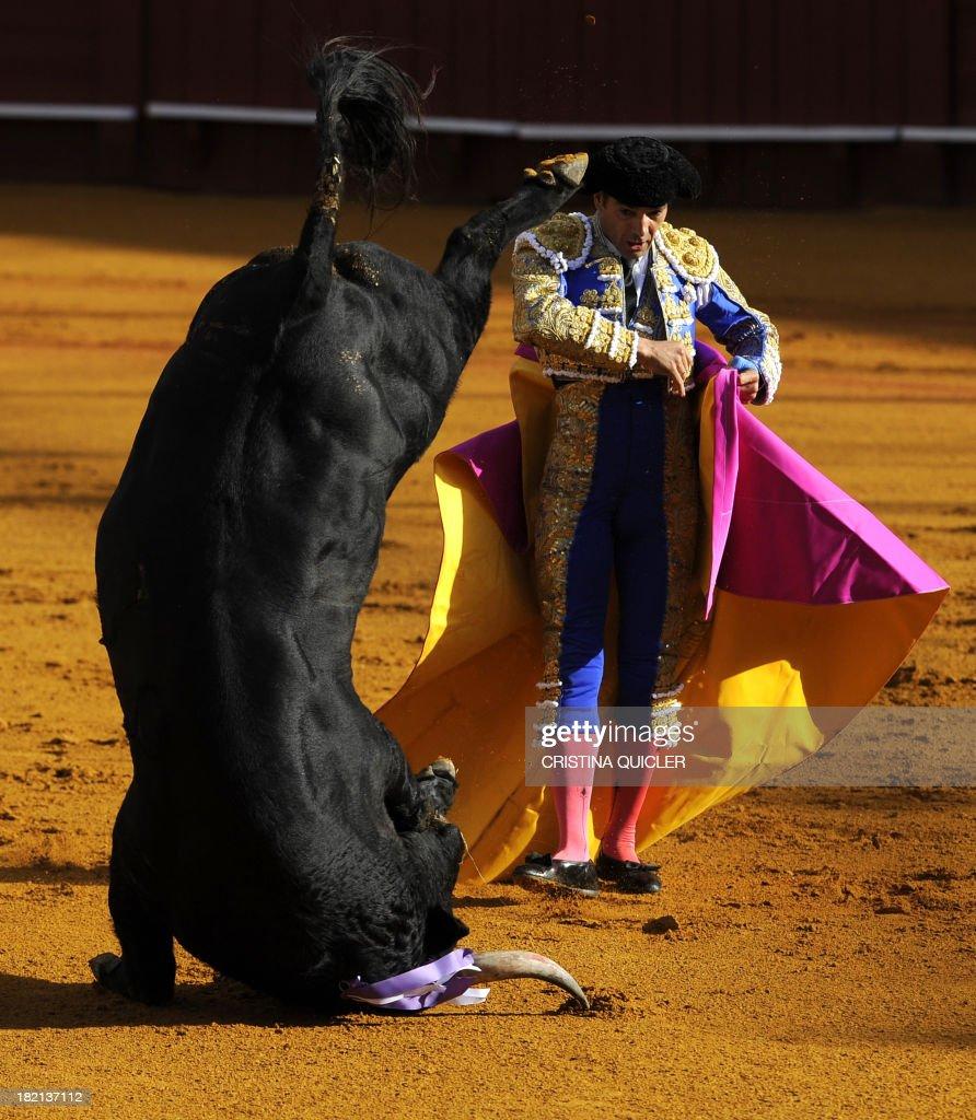 Spanish matador Manuel Jesus 'El Cid' performs a pass on a bull during a bullfight at the Maestranza bullring in Sevilla on September 28, 2013.
